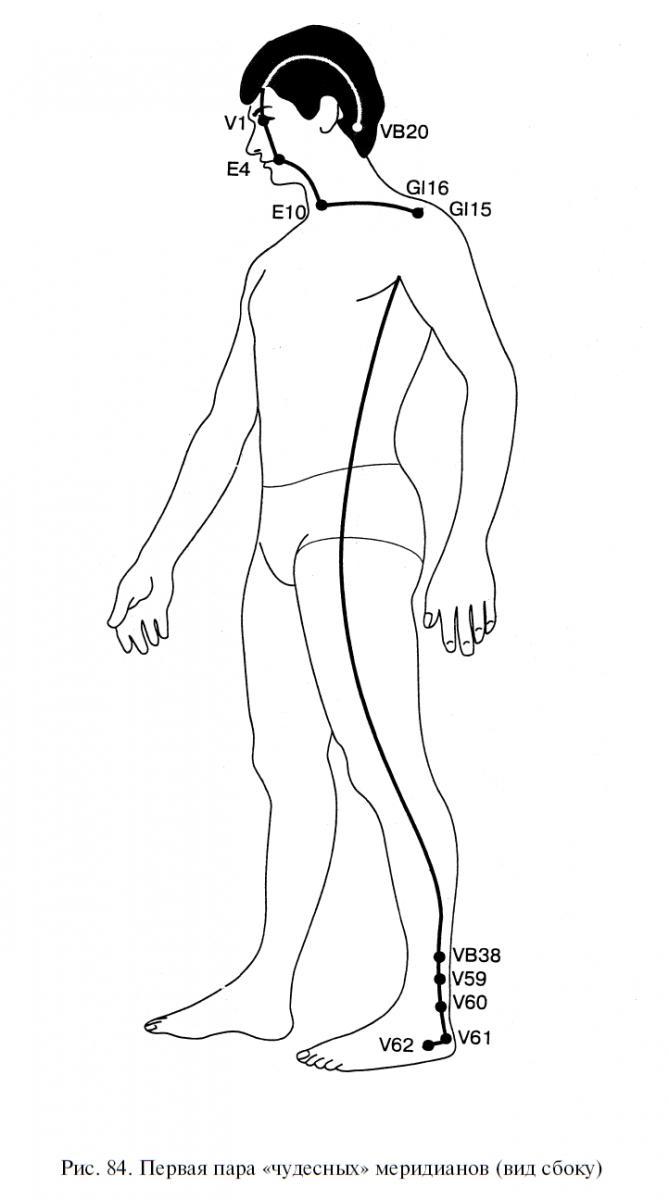 схема меридианы тела