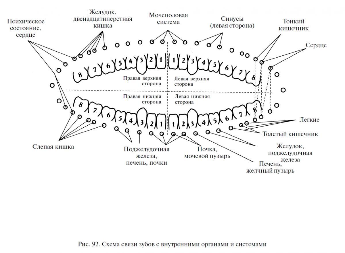Схема зубов по номерам фото
