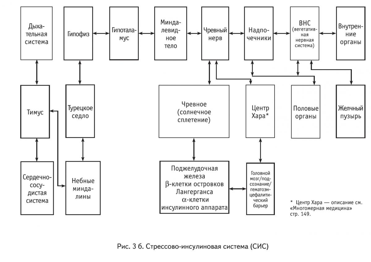Система Ретикулоэндотелиальная фото